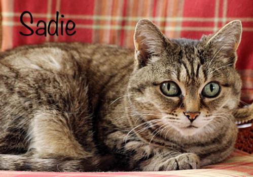 sadie-lady